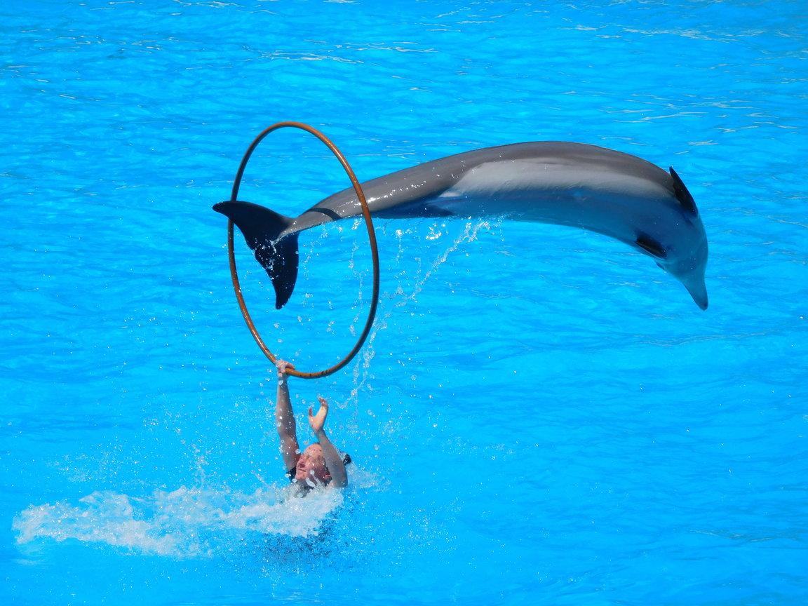 dolphin_180417_a