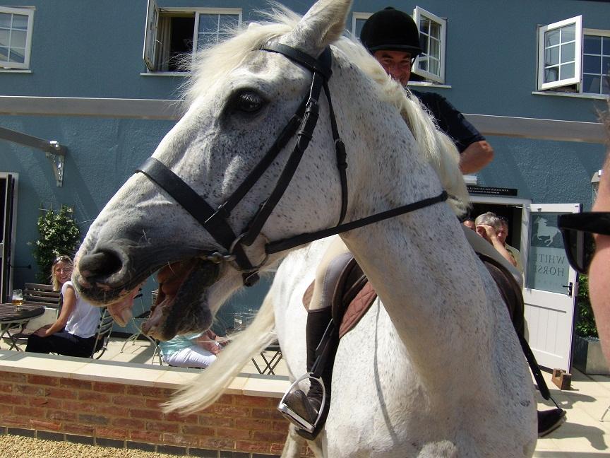 dee VSM Horse